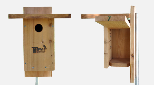 bluebird house plans texas